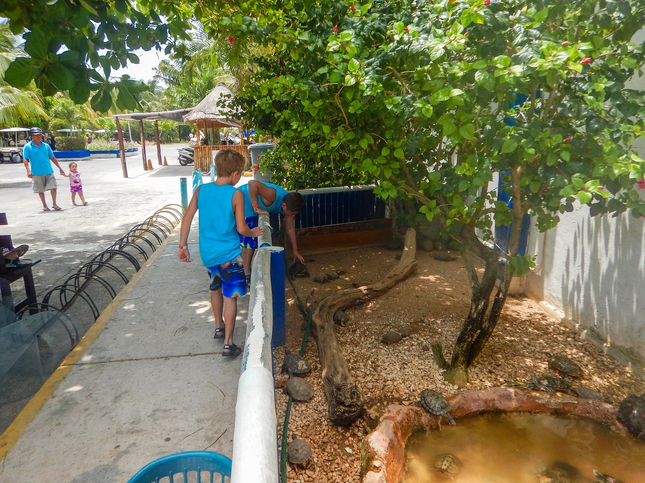 At the Turtle Farm — Tortugranja — to see their conservation work and visit with the turtles.  Traveling with my aunt and nephews in Isla Mujeres, Mexico.