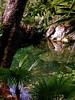 Paraiso Cenote(null)