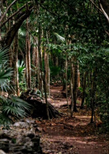 Jungle Path to the Sian Ka'an Lagoons