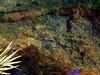 Paraiso Cenote