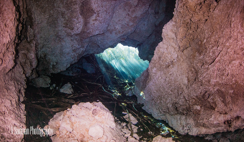 Tree roots in the opening of the cenote