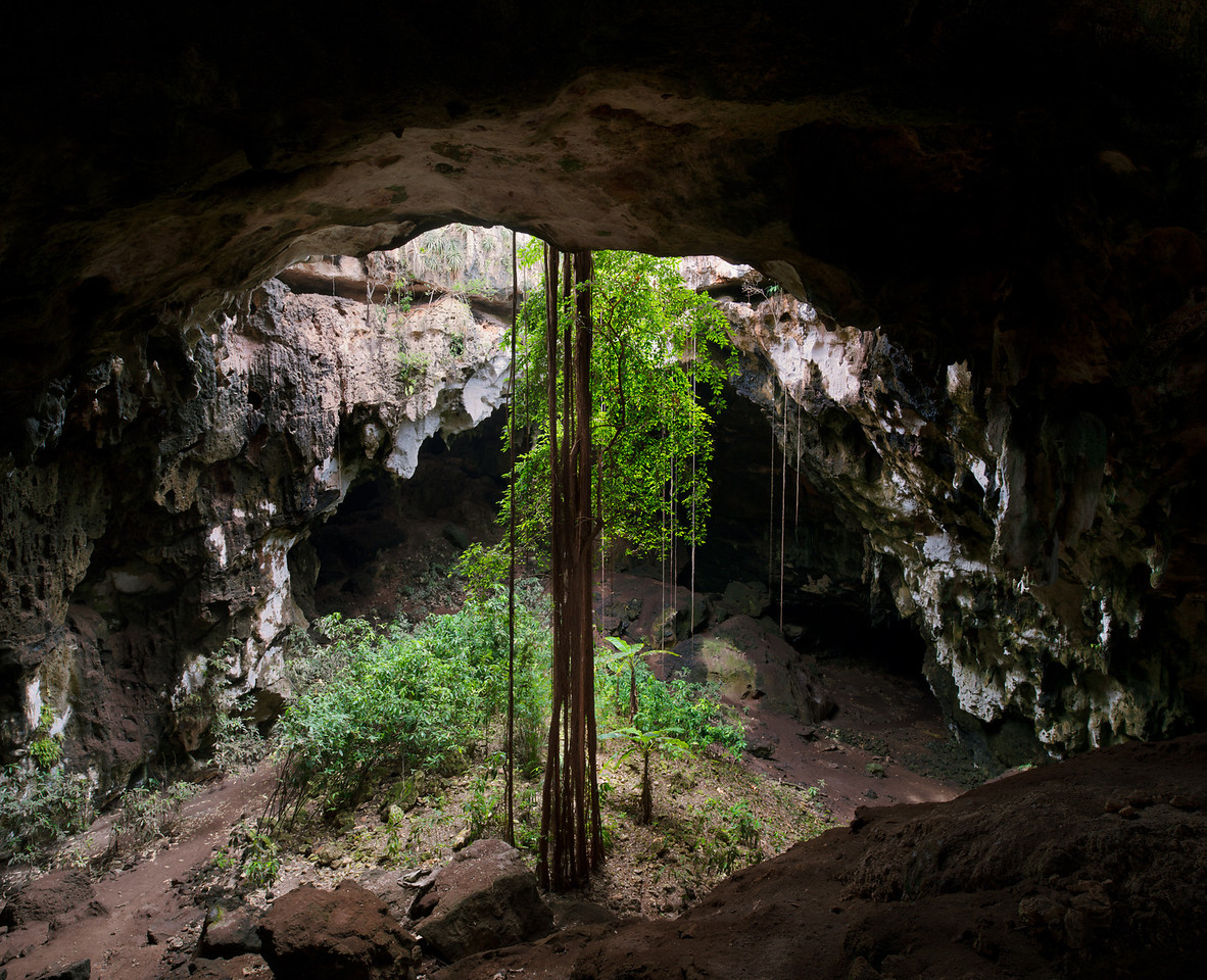 Calcehtok cavern, with its huge circular entrance with ficus garden with their descending into the cave amid tropical vegitation. Yucatan. Mexico