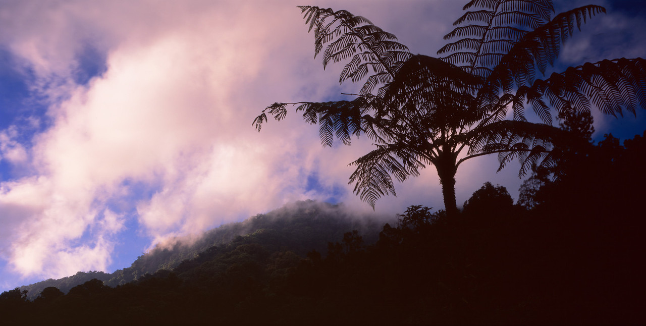 El Triunfo Biosphere Reserve, Chiapas, MEX / Tree ferns, Helecho (Spanish) Cyathea sp., silhouetted against sunset after passing storm. 408H1