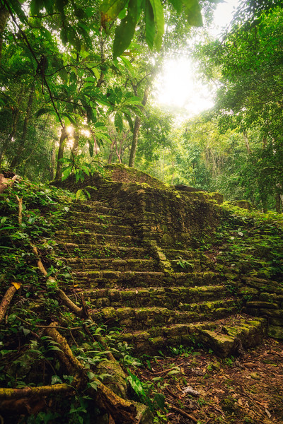 Forest taking over the Mayan ruins of Palenque