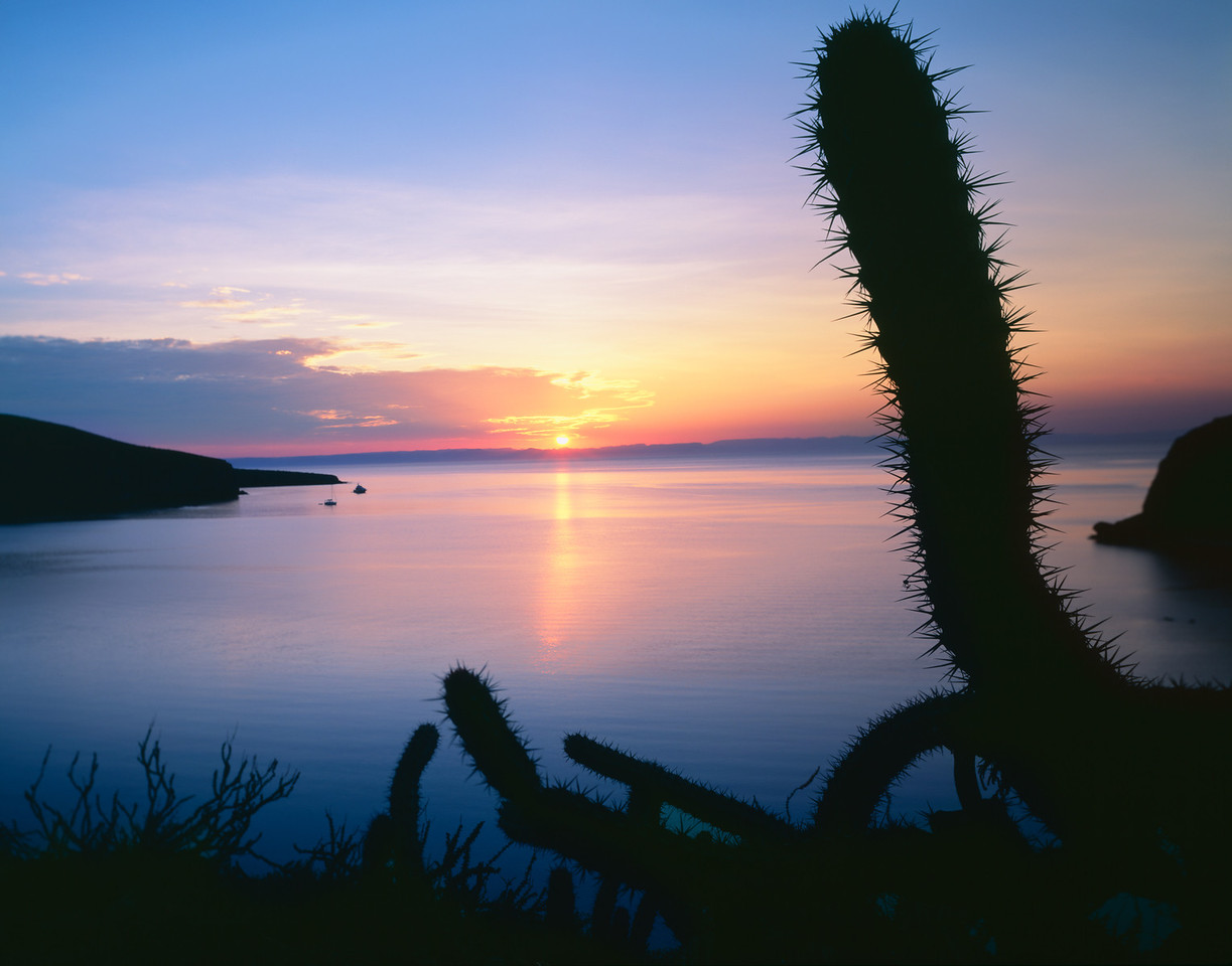 Baja California Sur, Mexico / La Paz, Estero Balandra. The shimmering waters at sunset with silhouetted Galloping cactus, Machaerocereus gummosus, on surrounding cliffs. 907H5