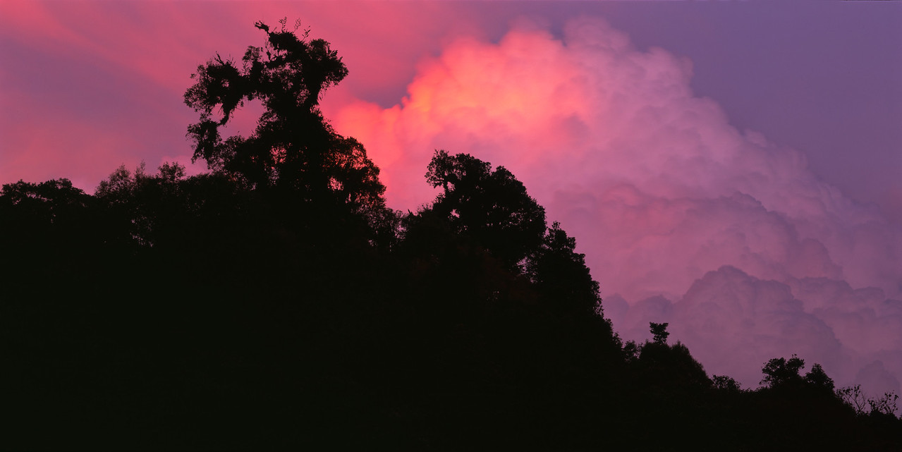 El Triunfo Biosphere Reserve, Chiapas, MEX / Thunderhead clouds at sunset above dense cloud forest canopy. 408P2