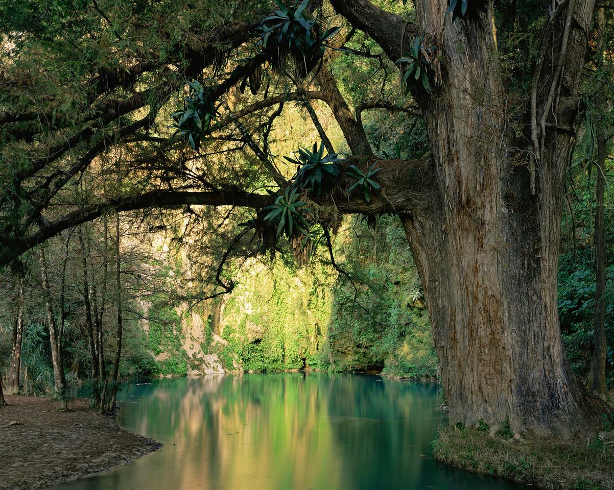 San Luis Potosi, Mexico / Waters at Minas Viejas  falls on the San Luis Potosi-Tamaulipas with giant Sabino, Taxodium sp. with Agave sp. growing on branches.  1203H3