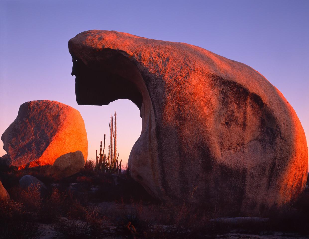 Baja California, Desierto, MEX/Central, granite boulders near Catavina with Senita cactus (Cereus schottii) & Boojum (Idria columnaris) at sunset. 290h                           aca