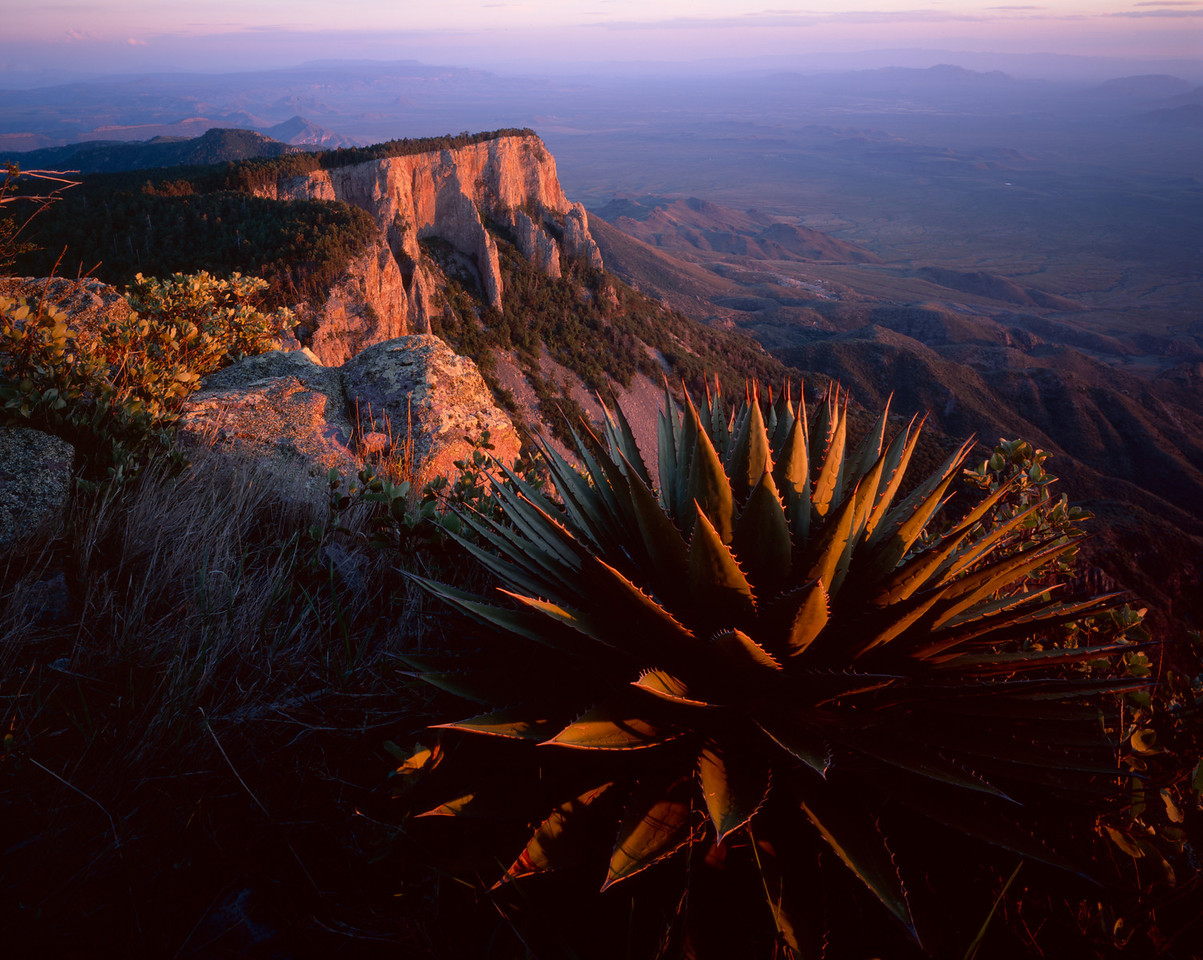 Sierra del Carmen, Coahuila, Mexico /  Lone Agave, Agave potrerana, near Sierra del Carmen summit with sunset light on cliff crags below. 505H6