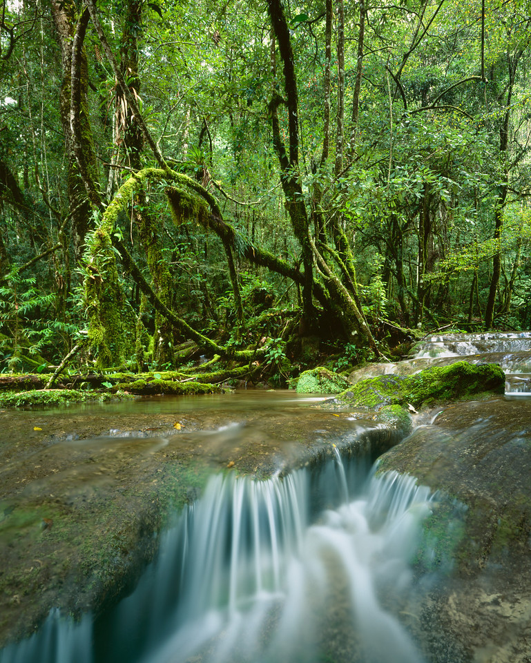 Tamaulipas, Mexico / El Cielo Biosphere Reserve cloud forest with Bromeliads growing in vine and moss covered forest lining stream's series of waterfalls. 1003V2
