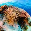 Anenome Seascape