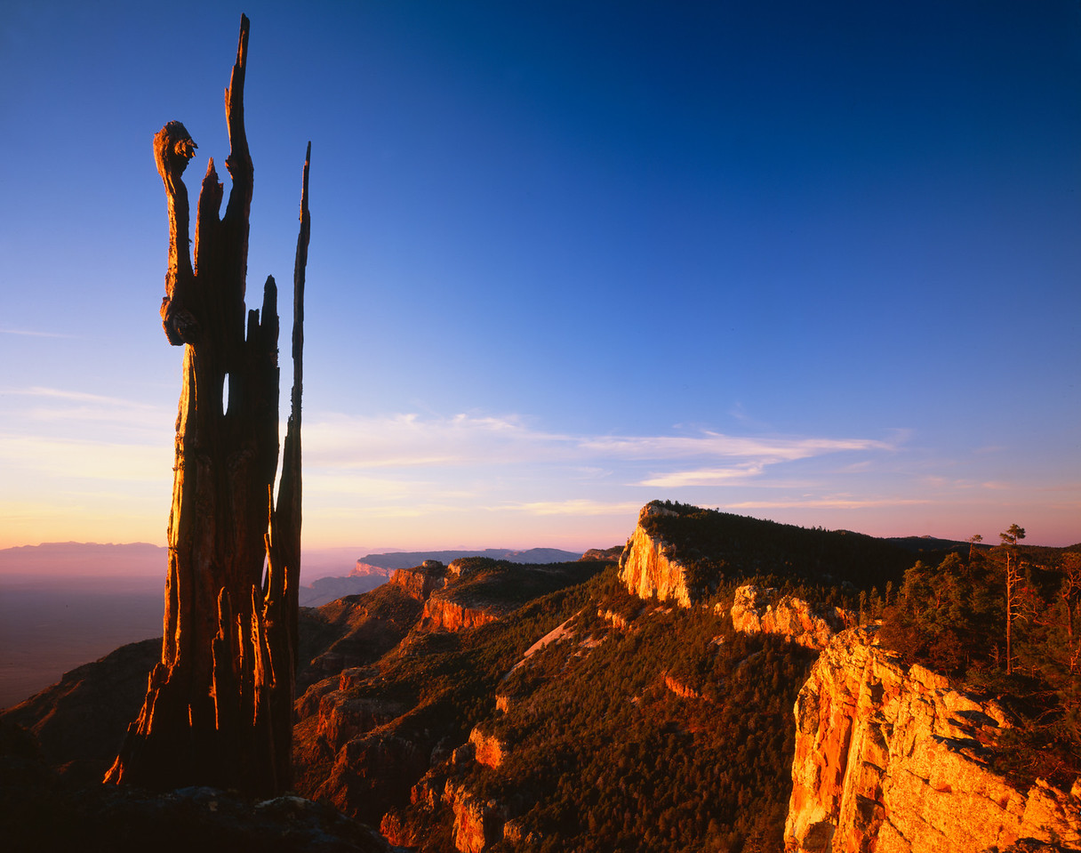 Sierra del Carmen, Coahuila, Mexico /  Lone pine snag, on summit ridge glowing red at sunset, with distant Chisos Mountains in Texas at left background.505H9