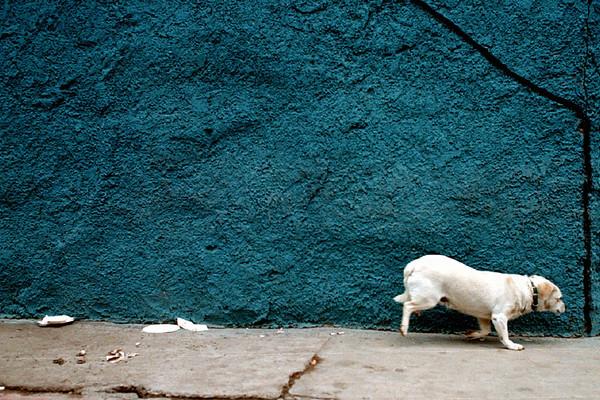 Stray Dog, Rosarita Beach, Mexico