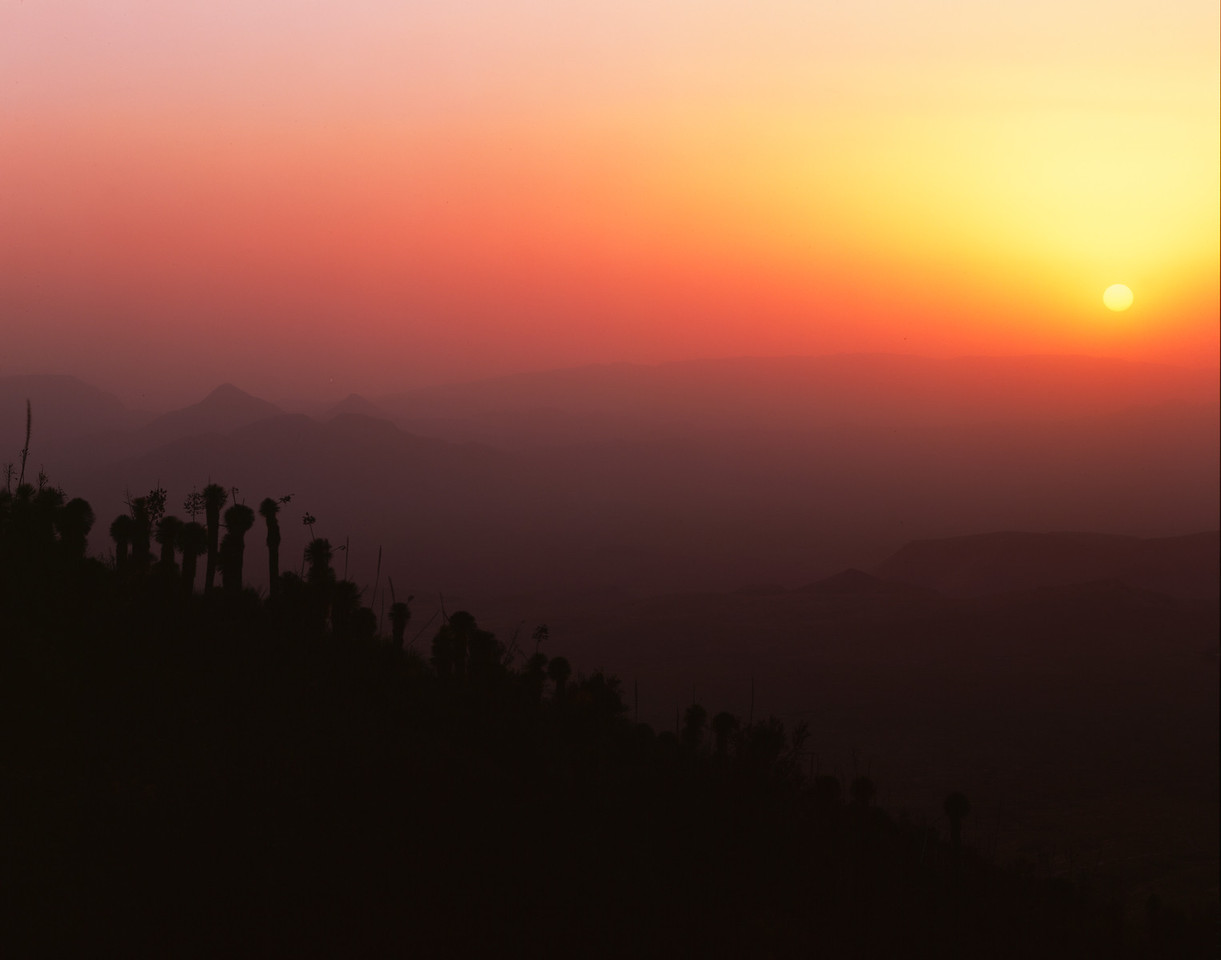 Sierra del Carmen, Coahuila, Mexico / Sunset silhouetting Yuccas, Yucca rostrata, on slope of the Sierra del Carmen, with raging sand storm on leaving the sun nearly obscured.1105H11