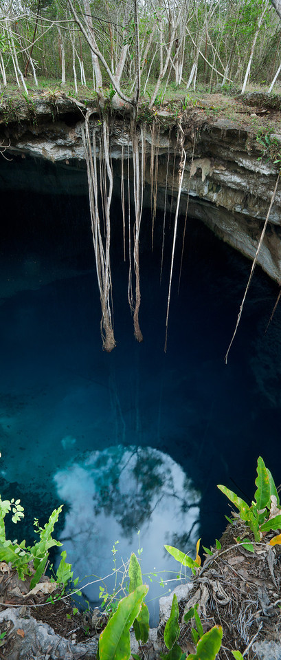 Cenote Noh-Moson, in the state of Yucatan, Mexico, is ringed with ficus trees with ten meter long roots reaching toward the blue water below.