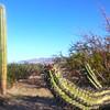 Nature Walk, Budding Cactus