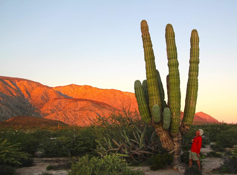 Las Animas Wilderness Lodge, Nature Tour,  Giant Saguaro Cactus