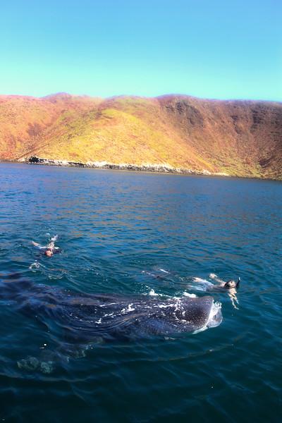 Baja AirVentures, Bahia de los Angeles, Two Snorkelers with Whale Shark