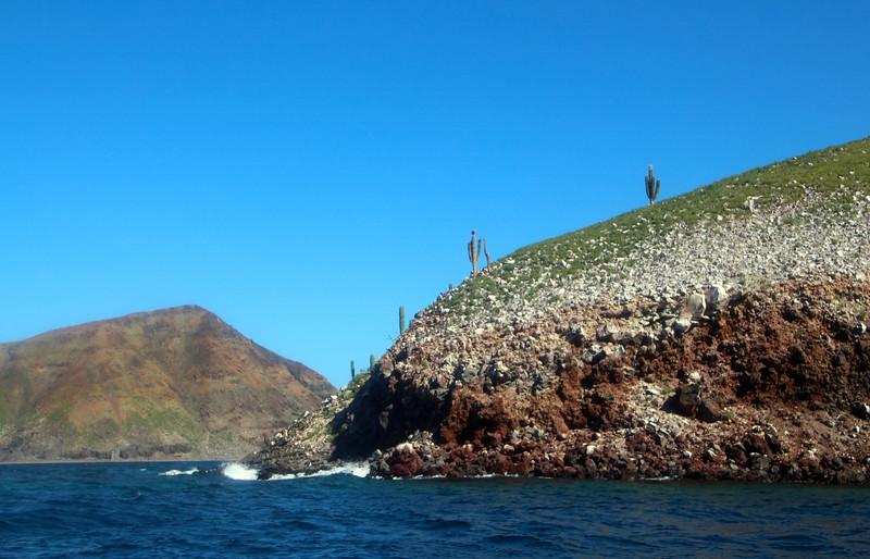 Midriff Islands, Gulf of California, Saguaro Cacti, Verdant Rocks