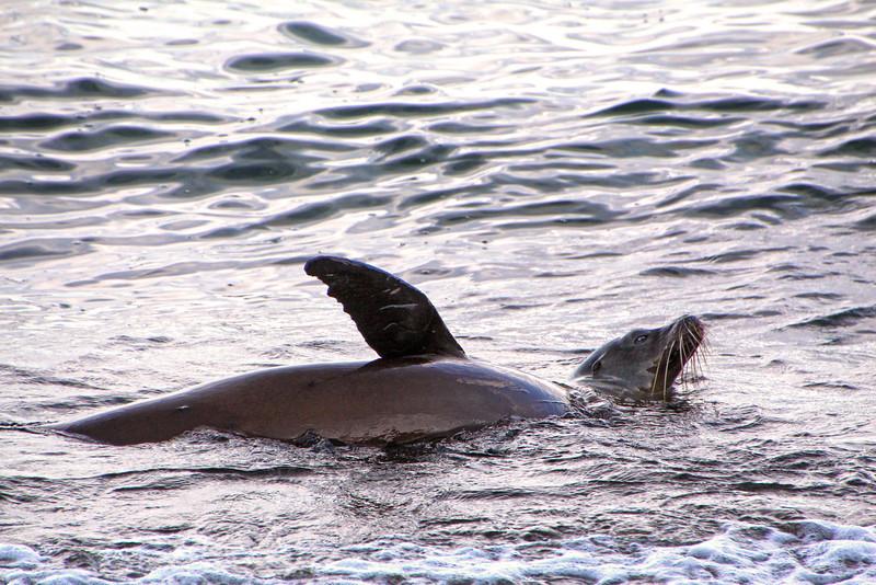 Galapagos Islands, Sea Lion, San Cristobal