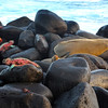 Galapagos Islands, View of Different Species on Lava Rock, Espanola