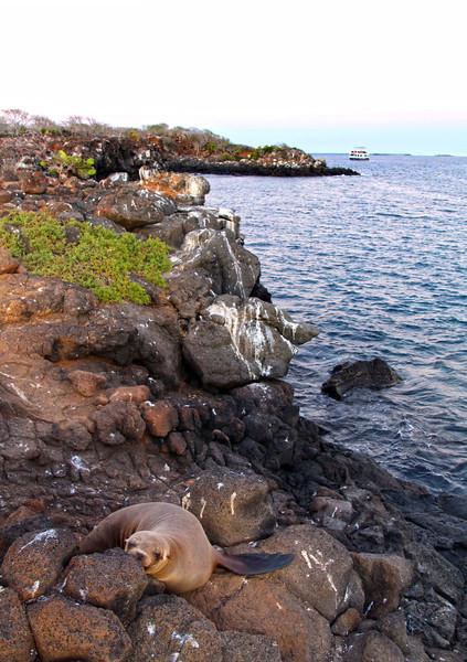 Galapagos Islands, Sea Lion, North Seymour Island