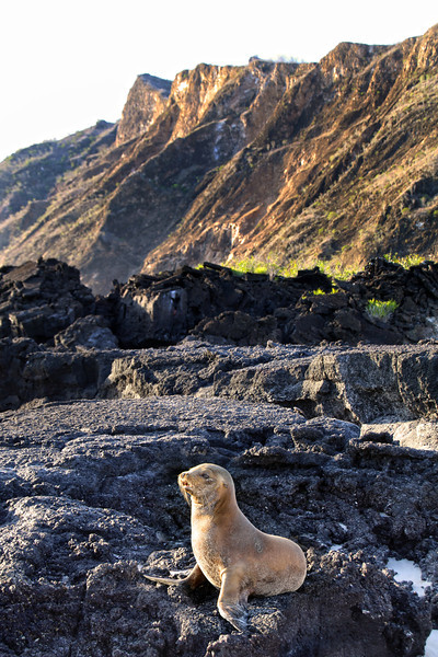 Galapagos Islands, Sea Lion on Lava Rocks, San Cristobal