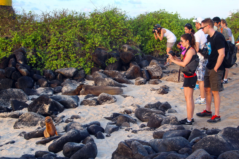 Galapagos Islands, Photographers with Sea Lion Pup, Espanola