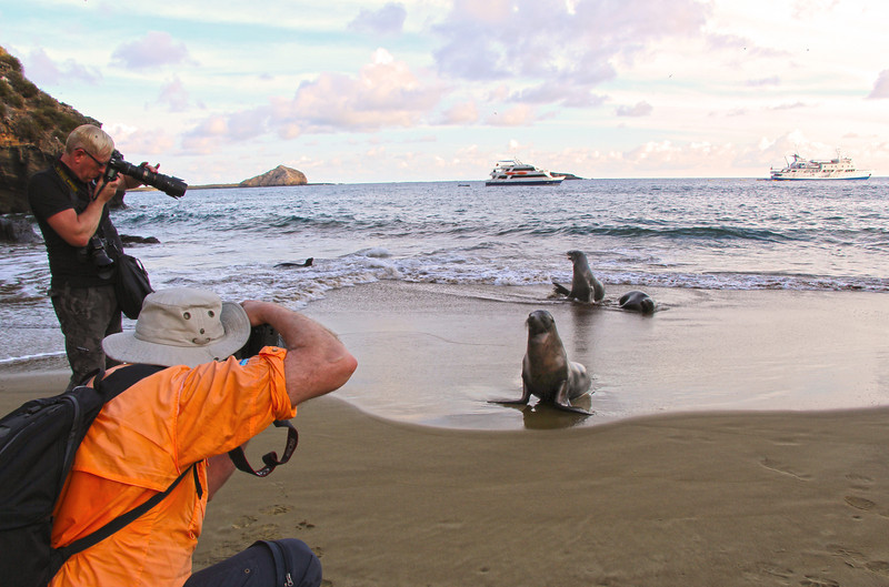Galapagos Islands, Sea Lions Posing for Photographers, San Cristobal