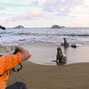 Galapagos Islands, Sea Lions Posing for Photographers, San Cristobal