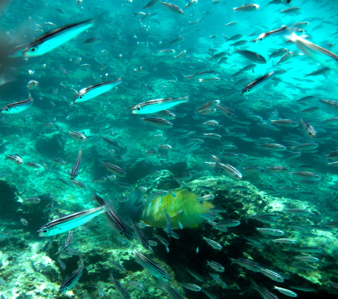 Galapagos Islands, Fish View Snorkeling, Bartolome