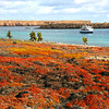 Galapagos Islands,  View from South Plaza over Sesuvium Fields