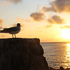 Galapagos Islands, Sunrise over South Plaza Island