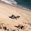 Horseback Rides on Los Cabos Beach