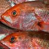 Cabo San Lucas Fish Market