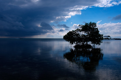 Mangrove Tree at Sunset - Caye Caulker, Belize