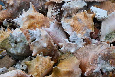 Shells in Caye Caulker, Belize