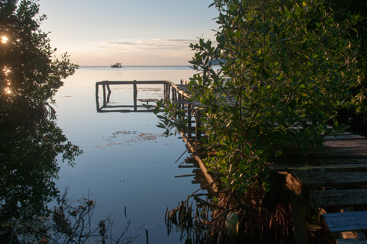 Abandoned Dock in Mangrove Trees in Caye Caulker, Belize