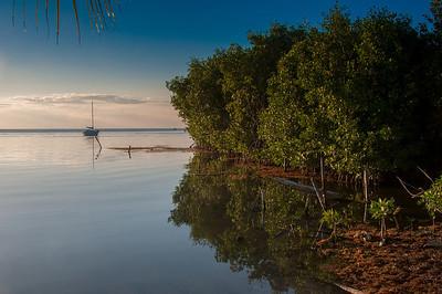 Mangrove trees in Caye Caulker, Belize