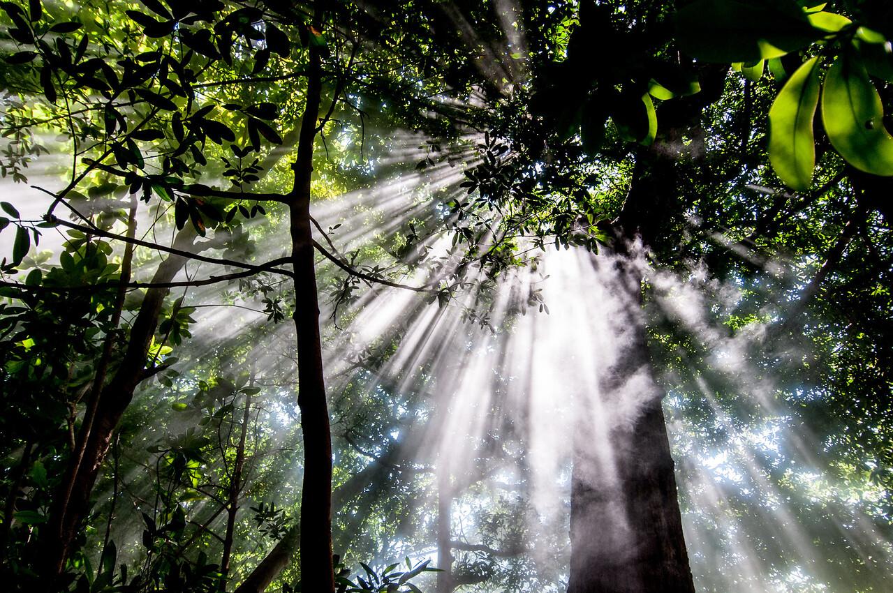 Sunbeams in Steam in Rincon Volcano National Park, Costa Rica