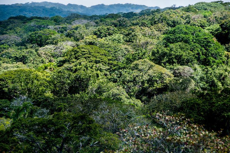 Canopy at Rincon Volcano National Park, Costa Rica