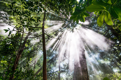 Sunbeam through forest canopy in Tapanti National Park, Costa Rica