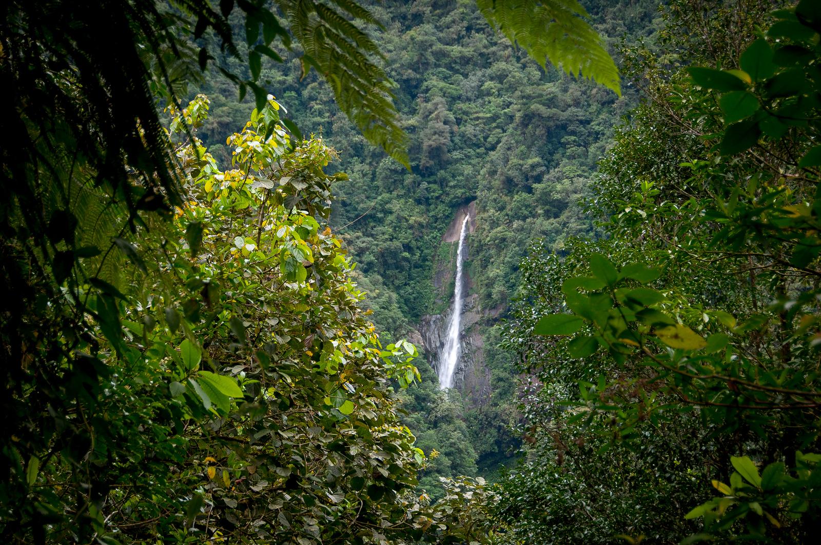 Talamanca Range-La Amistad Reserves / La Amistad National Park