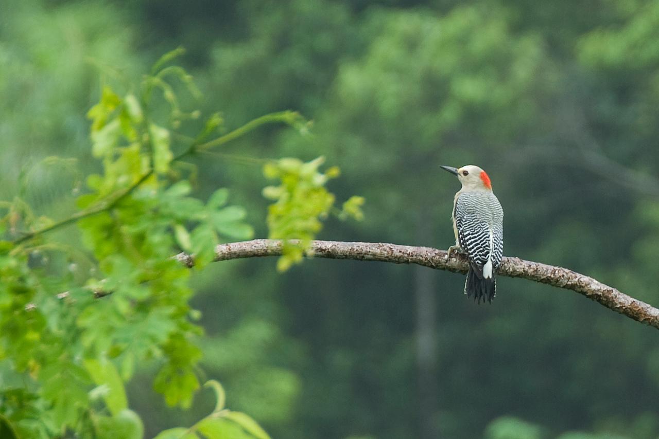 Bird perched on a tree branch in Roatan, Honduras