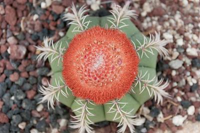 Cactus garden in Cabo San Lucas, Mexico