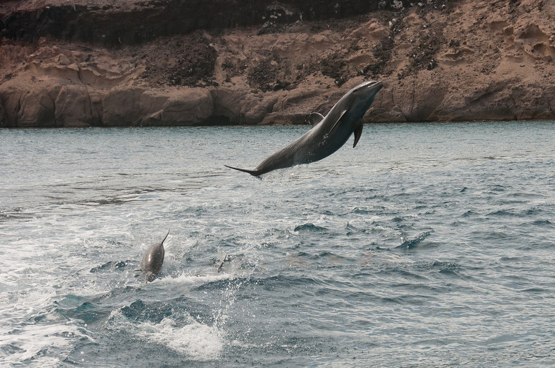 Jumping Dolphins - La Paz, Mexico