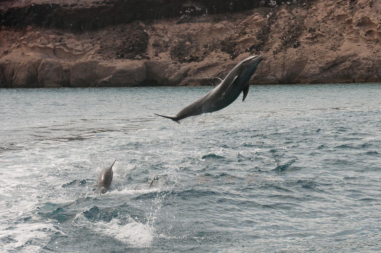 Jumping Dolphins - La Paz, Mexico