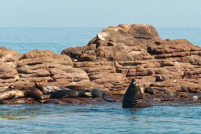 Barking sea lions near La Paz, Mexico