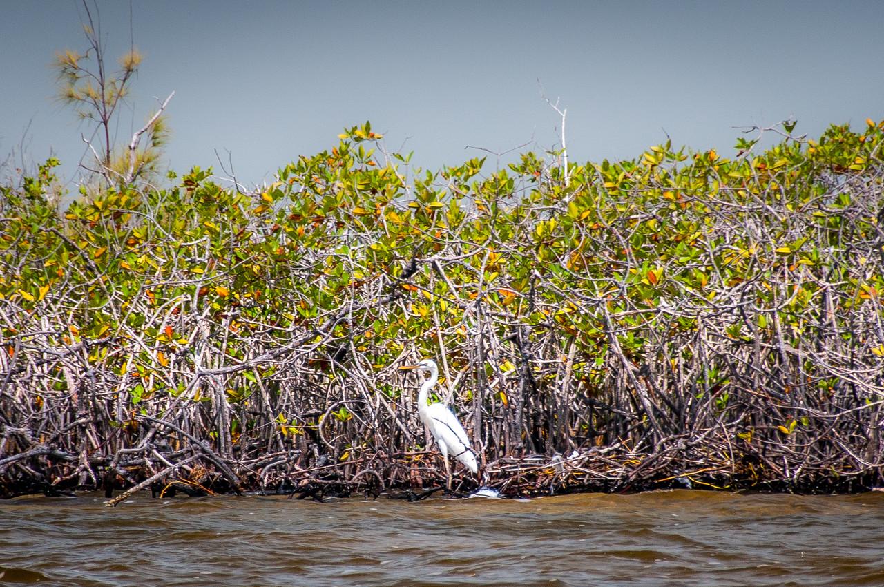 Cenote mangrove in Mayan Riviera, Mexico