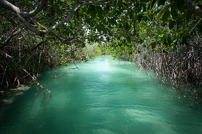 Cenote mangrove with clear turquoise water in Mayan Riviera, Mexico